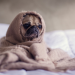 Thumbnail for Canine Influenza Virus Update: The Situation in Canada and the United States